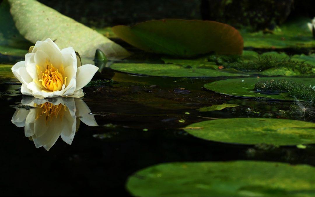 Tips voor een vijver in de tuin