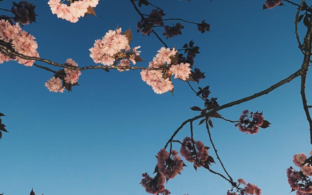 De lente brengt verandering in je interieur