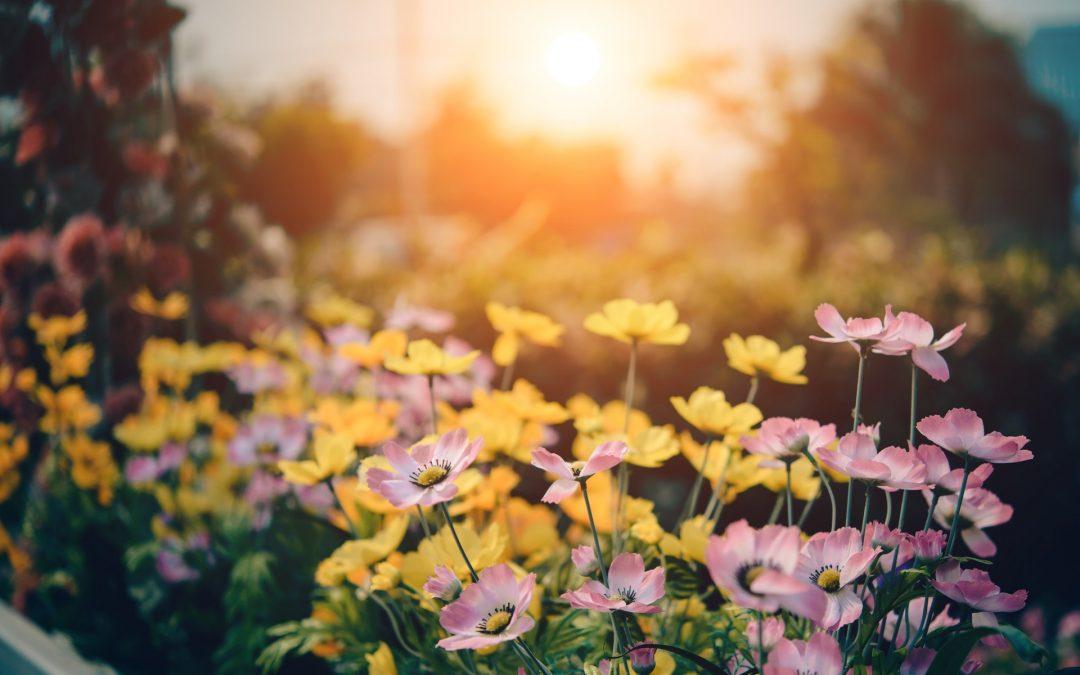 Zomertips voor de tuin
